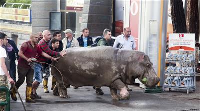 Hippo found roaming around nearby. His name is Beglar