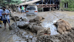 Still don't know how many of 600 animals are dead, recaptured or free out in the city